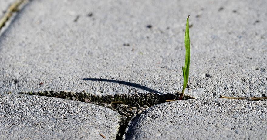 A blade of grass emerging through concrete craks