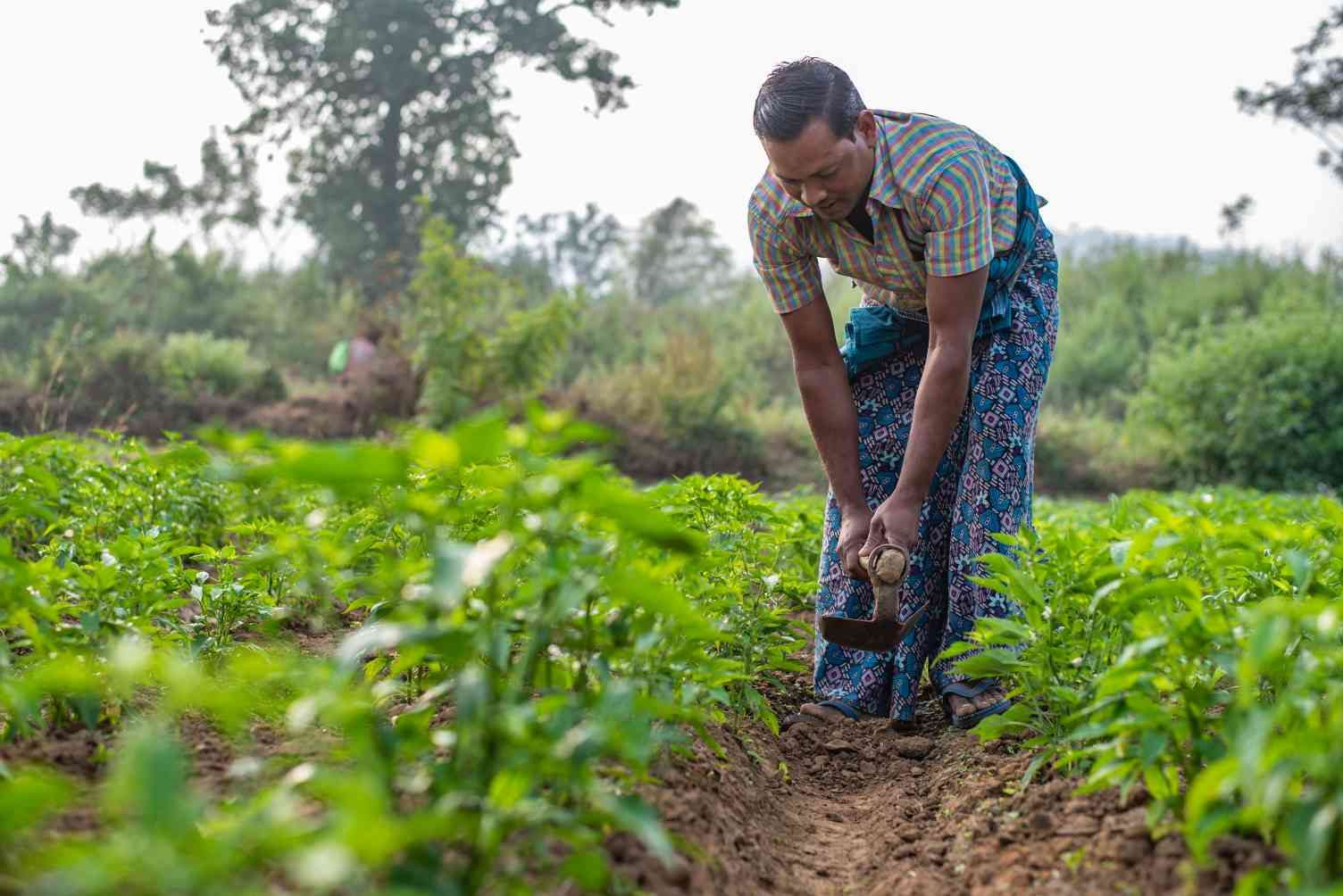 farmer working on a field in orissa-rural india
