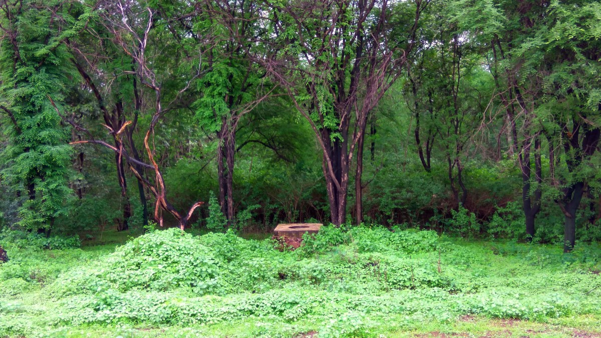 trees in a forest in India-Adivasi-Wikimedia Commons