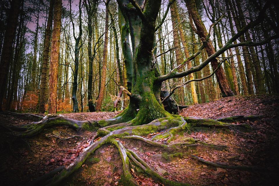 CSR Outdoor Woods Tree Autumn Leaves Wild Forest