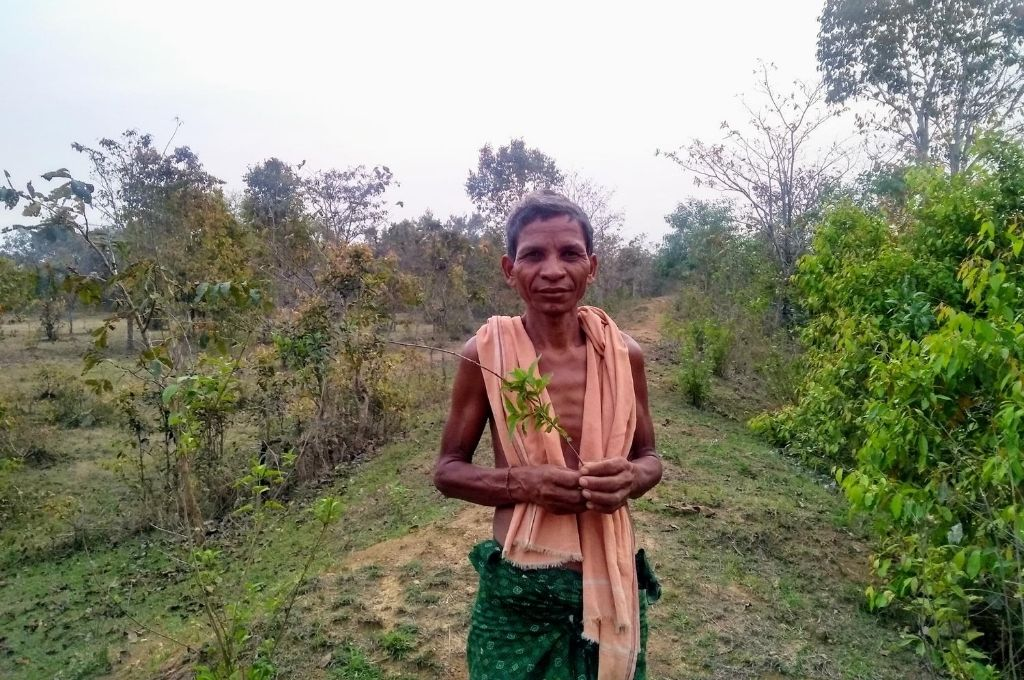 photo of a man holding a plant standing in a forest in Odisha-conservation