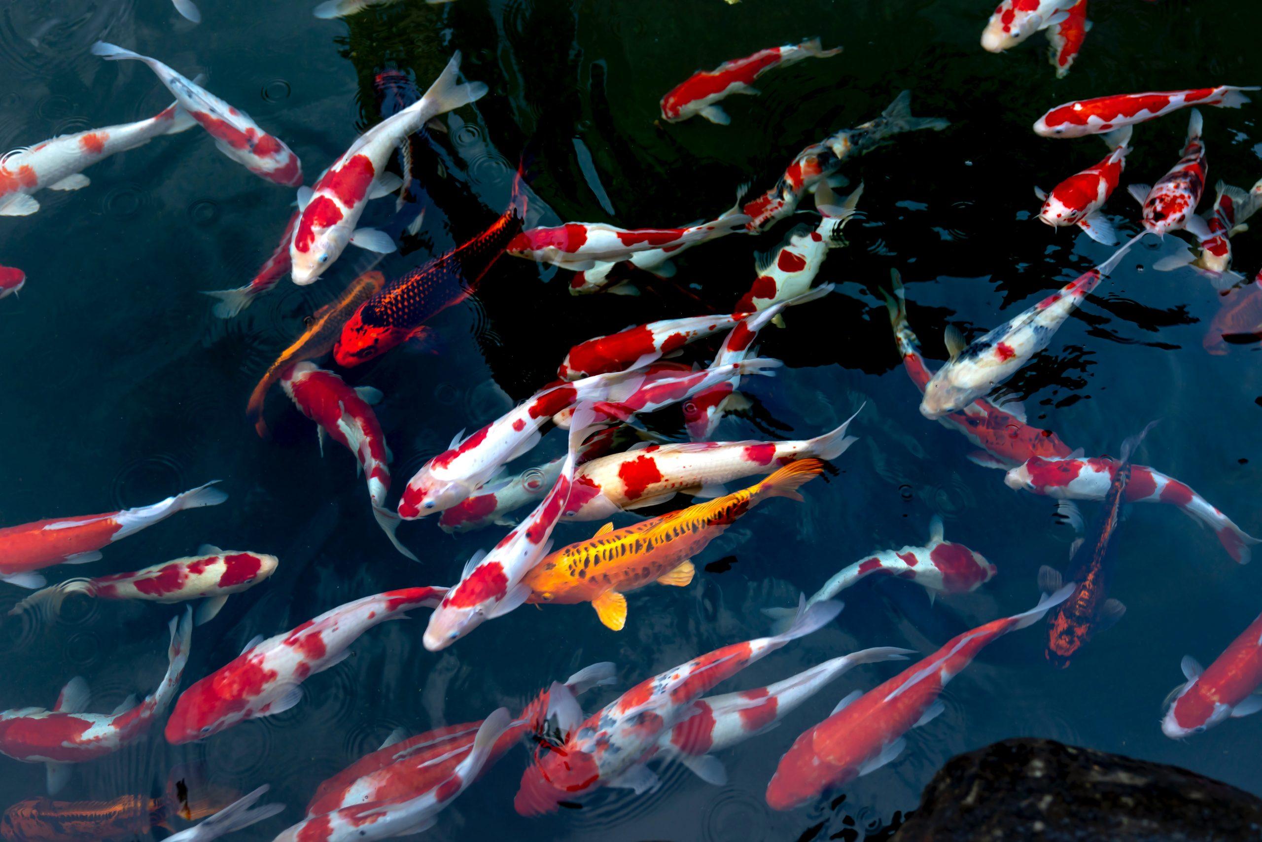 School of fish_Quang Nguyen Vinh_Pexels