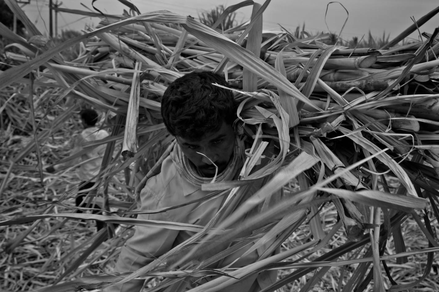 a farmer carrying straw_ASwaminathan_Budget2020