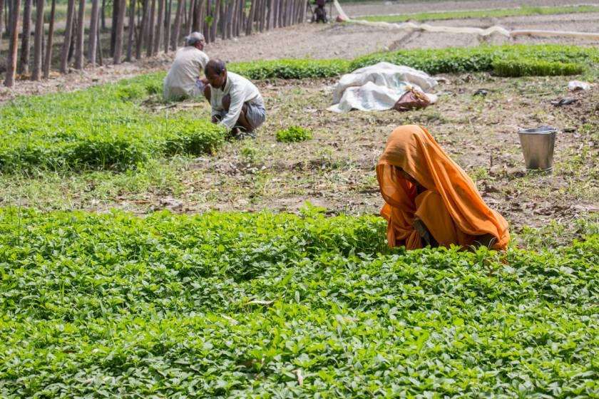 a woman farm labourer_agriculture-Picture courtesy: ©Bill & Melinda Gates