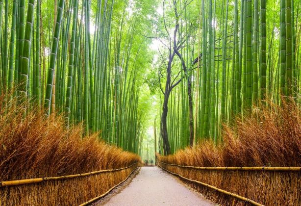 bambooPath.CenteredSelf.wellbeing_covid