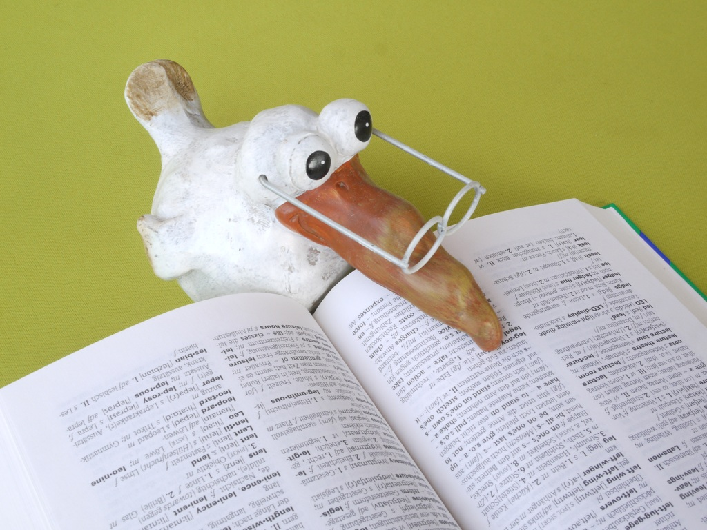 bird with glasses reading dictionary_nonprofit humour_pxhere
