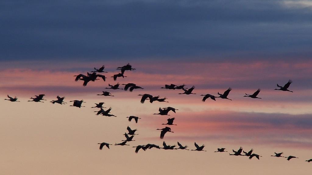 Birds flying in a V formation - teamwork