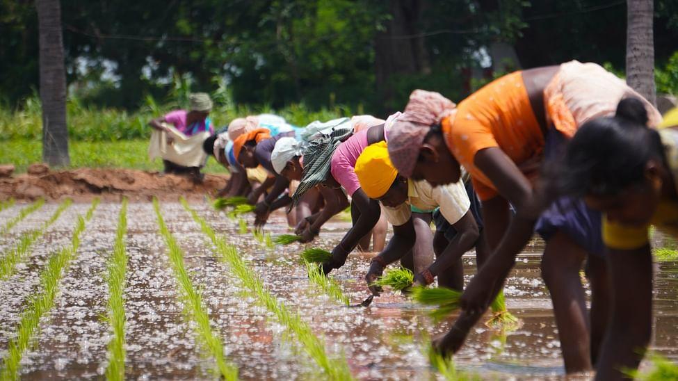 Women farmers sowing paddy_Unsplash