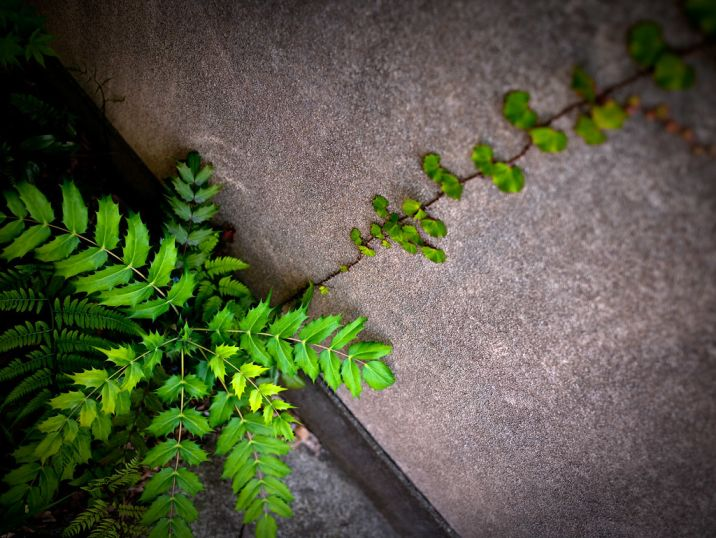 plant growing through cracks in a wall-resilience