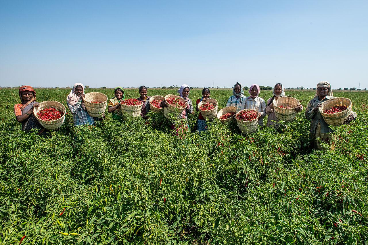 Women farmers in Karnataka