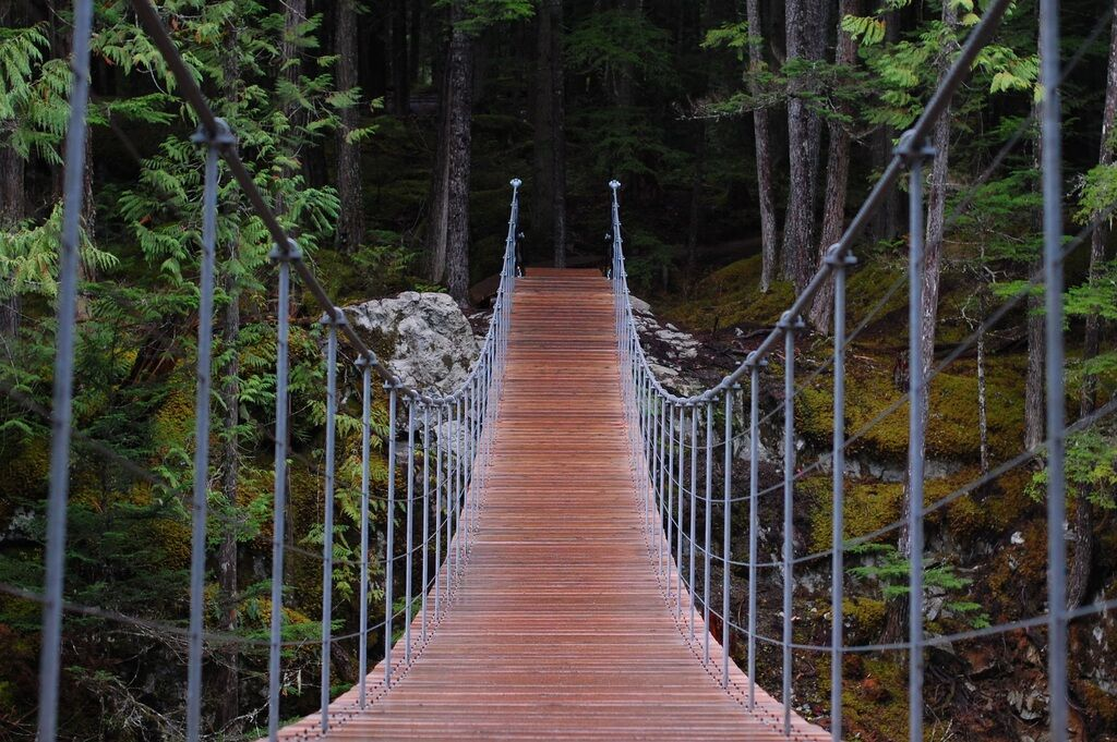 Suspending bridge in a forest_Pxhere