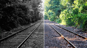 Train tacks with trees, with half the image in black and white and the other half in colour.