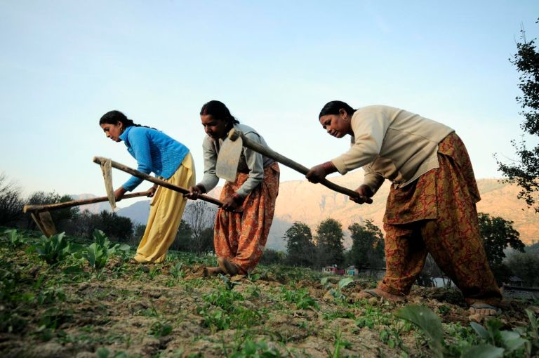 Indian women farmers ploughing the field_women farmers