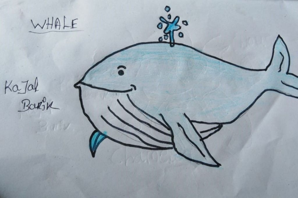 Drawing of a whale by Kajal