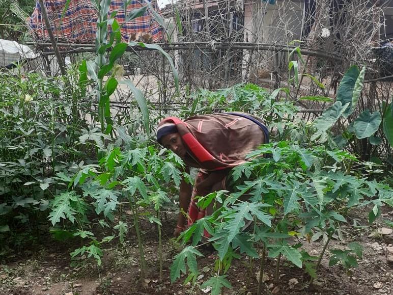 Kokila Devi attending to some plants-adivasi leader