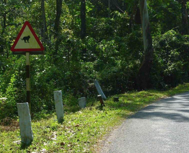monkey crossing in india-environment