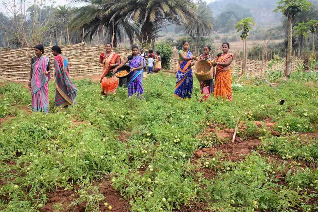 women working together on a field-rural livelihoods