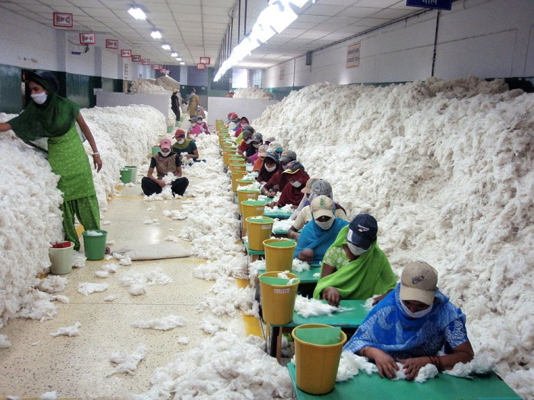 Workers manually decontaminating cotton before it goes for spinning_Wikimedia Commons_migration textile
