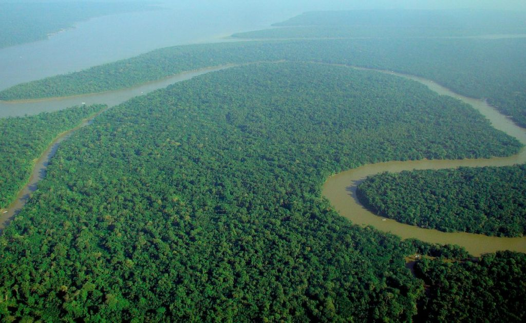 River flowing through a dense rainforest_Wikimedia Commons
