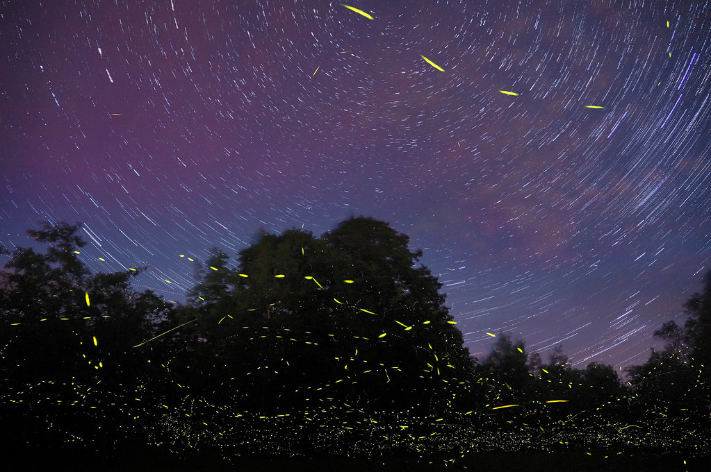 fire flies and star trails_nonprofit scale_flickr