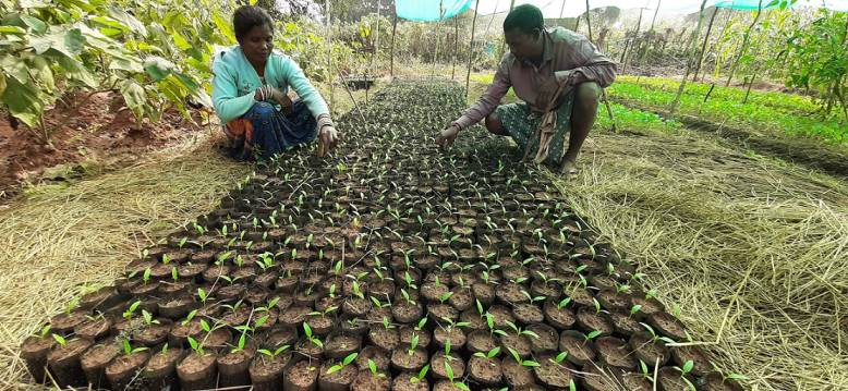 Two people crouching and taking care of saplings-Adivasi communities