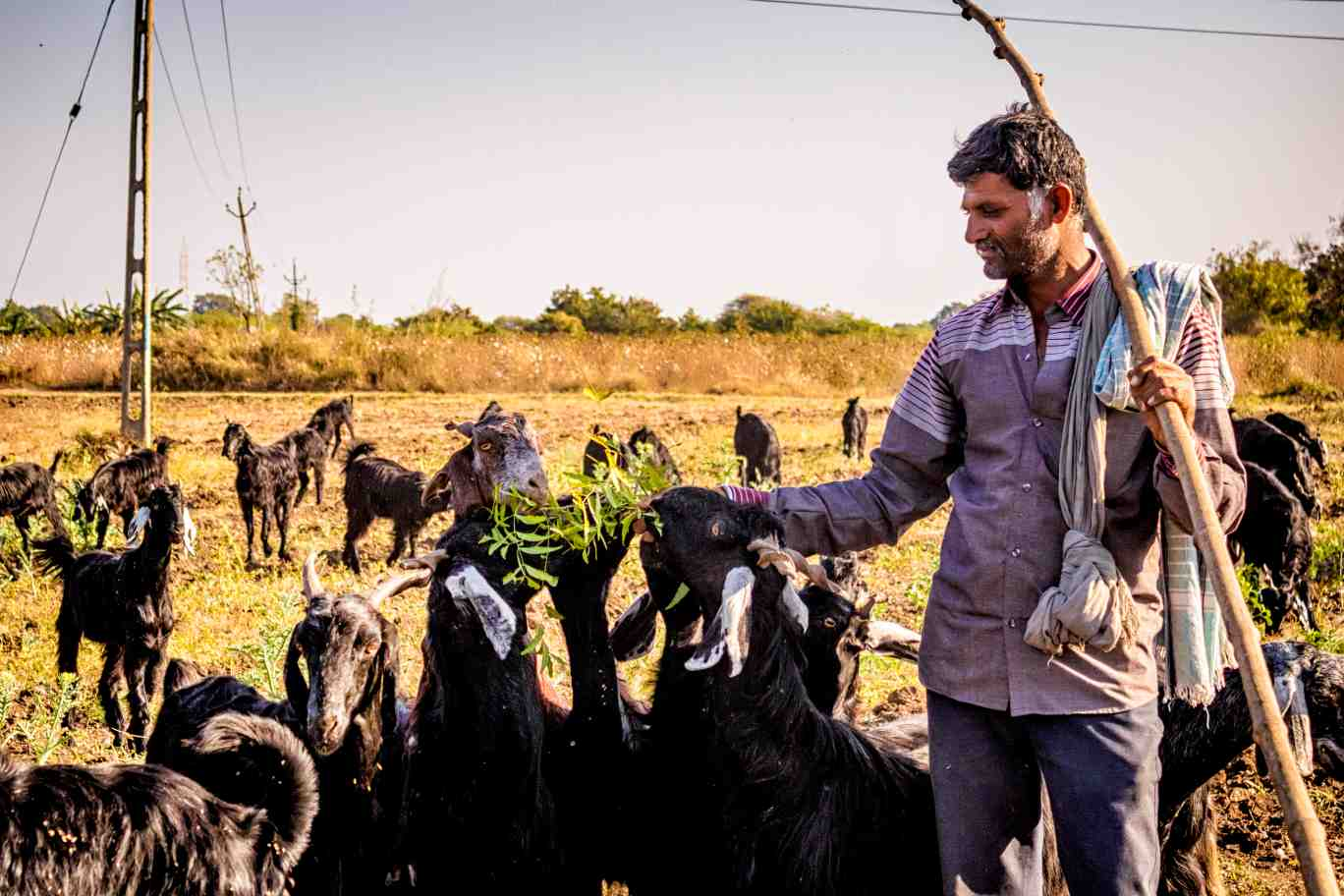 Pastoralist grazing goat_pastoral community