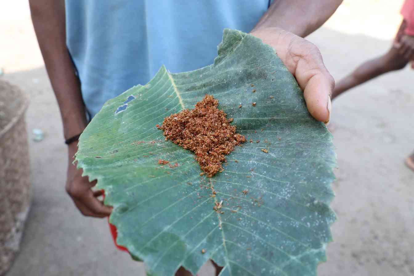 A person holding a big green leaf with red chutney-ant chutney