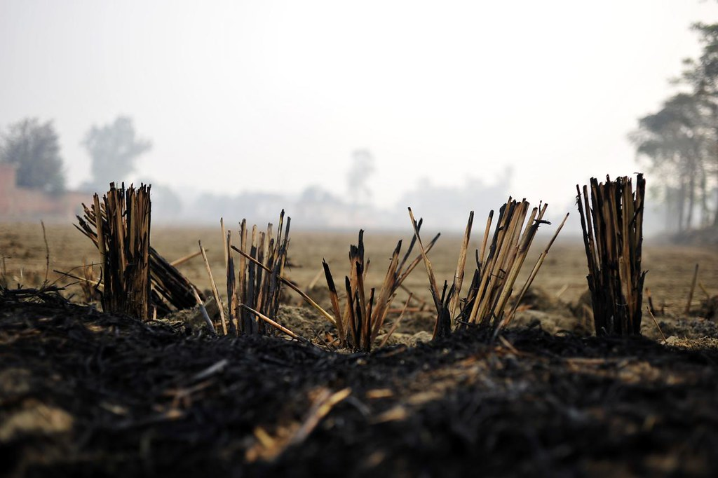 close up of a field with air pollution stubble burning