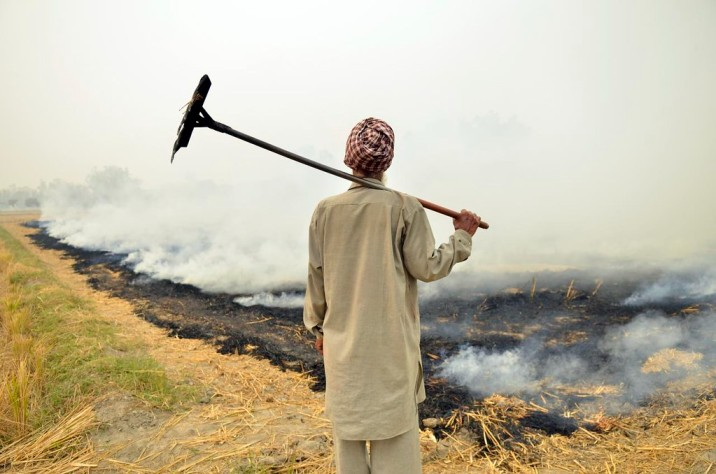 farmer standing with his back to field_air pollution stubble burning