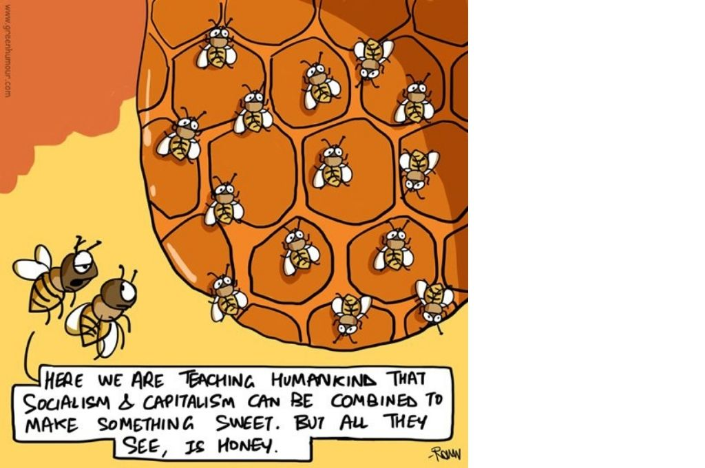 A comic about two bees staring at other bees on a hive and remarking that here we are trying to teach mankind that socialism and capitalism can be combined to make something sweet, but that all they see is honey-feel-good comics