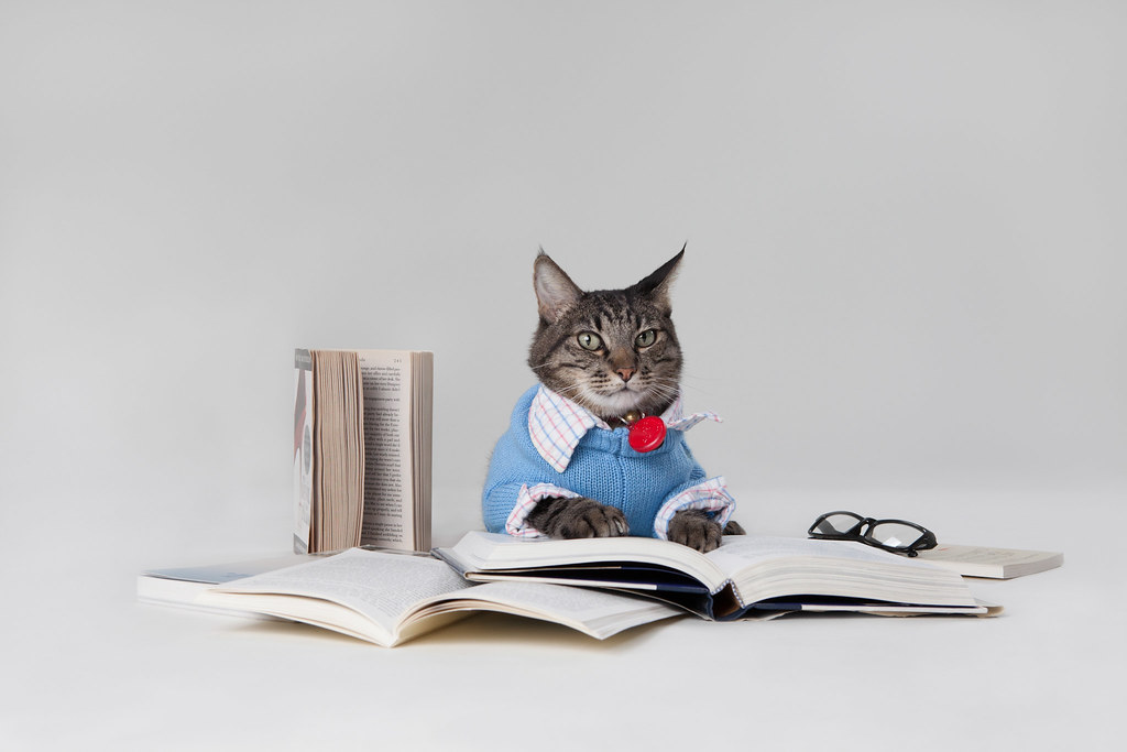 Cat reading books-math problems for the development sector-flickr