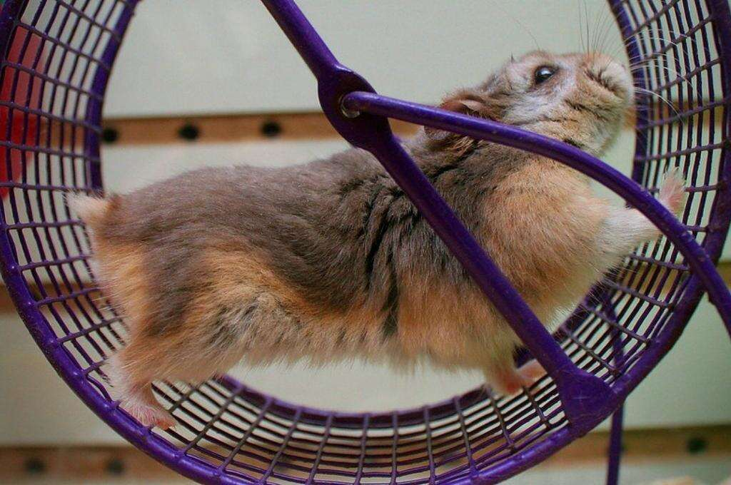Hamster running in a wheel-education nonprofit