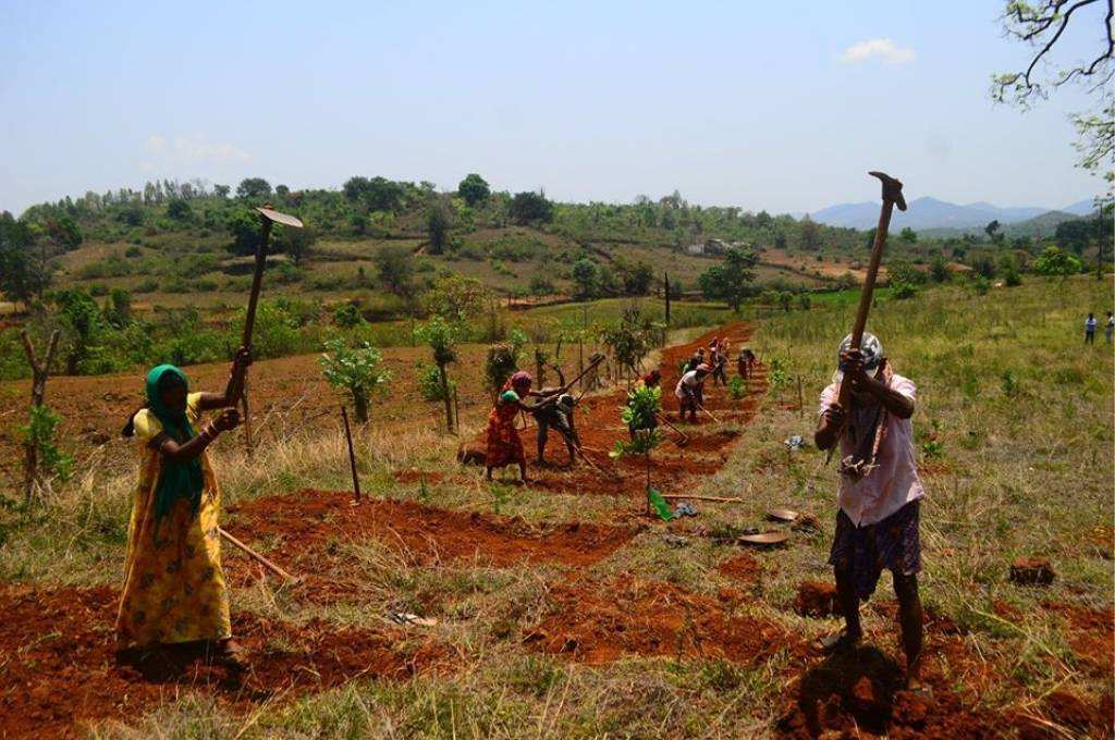 people working on a piece of land with digging and ploughing tools in Terangasil, Odisha-NREGA in Odisha