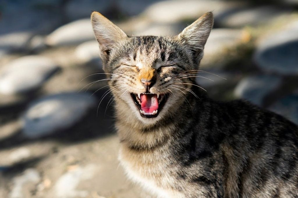 an image of a cat with its eyes closed and mouth open-funders