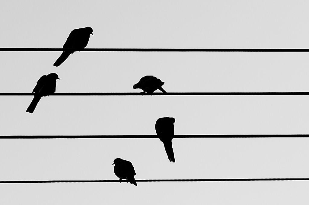 illustration of black birds sitting on black lines across a grey background-shit nonprofits say